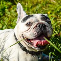 Hunde-Outdoor-Shooting